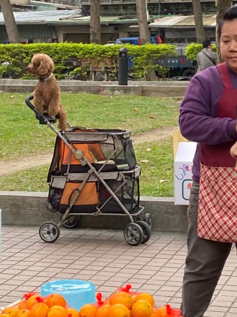 雙連朝市_かじをとる犬