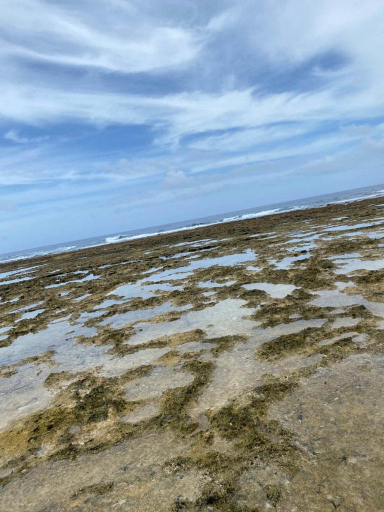 荒崎海岸のリーフを歩く